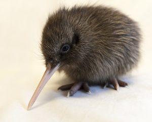 richard benton - Dusty, NZ Geographic